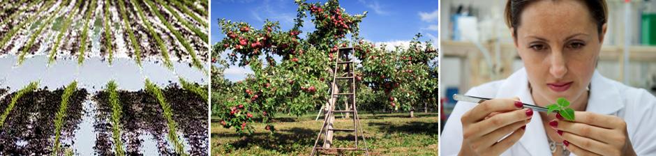 Farm Root
